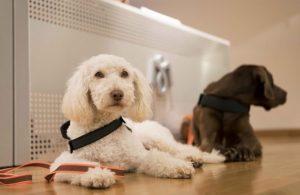 Imagen de los perros que acompañarán a los niños durante el programa Apico